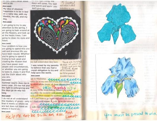 Blue Iris etc.