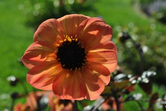 enlightened bloom