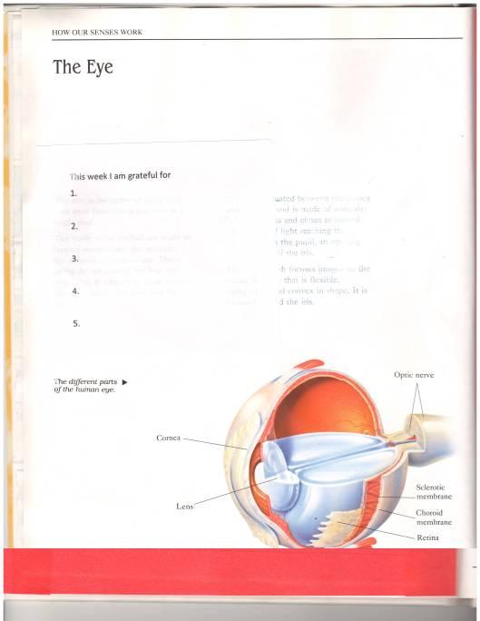 Jacobs book the eye