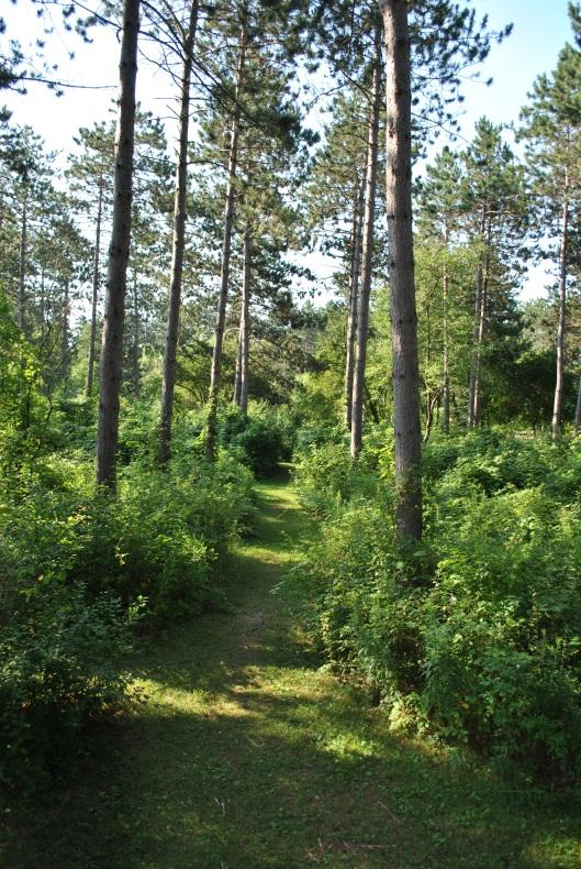 Monk Botanical Gardens path