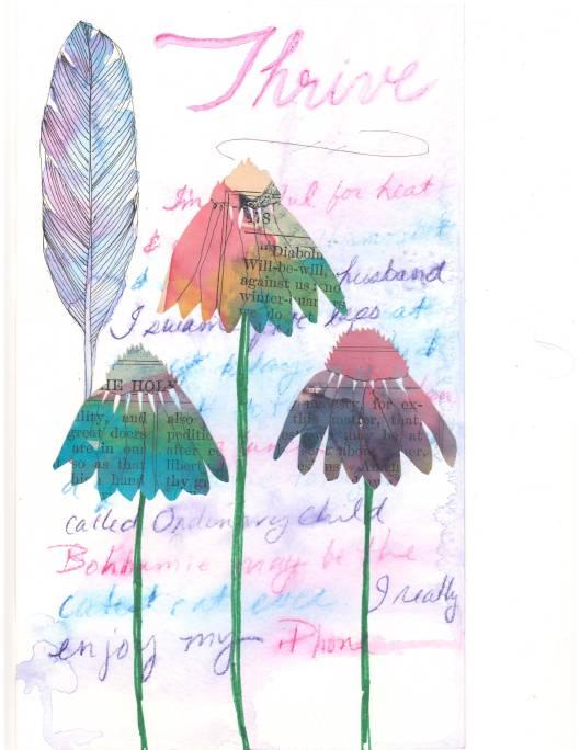 rainbow echinacea