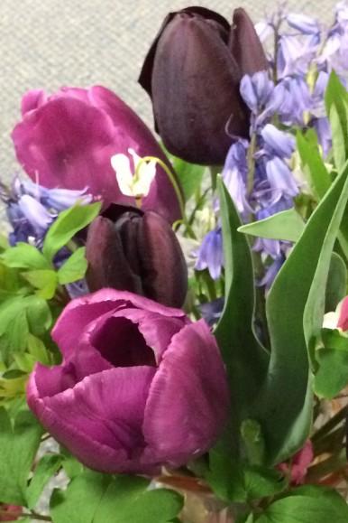 Janets tulipscloseup