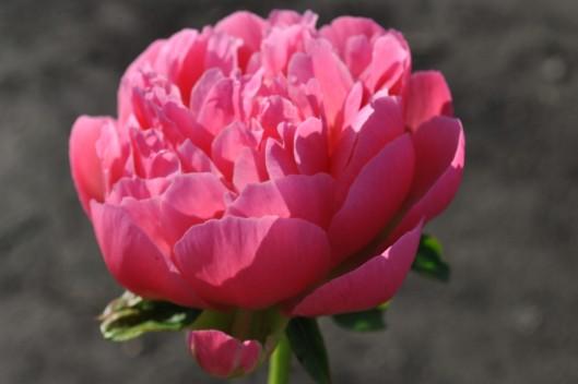 jungs flowers 001