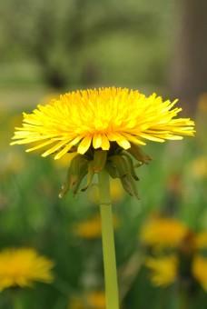 single bloom 002