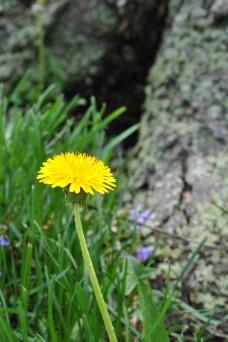 single bloom 003