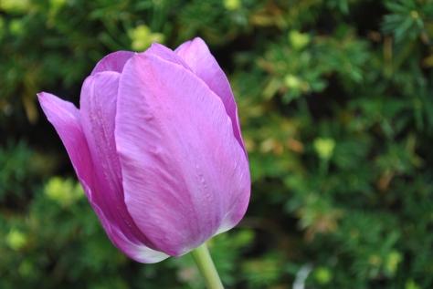 single bloom 005