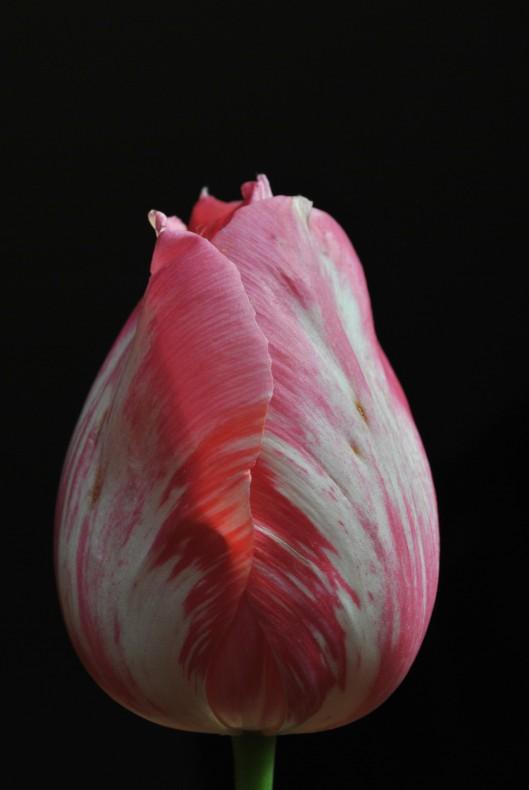 single bloom 018