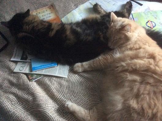 cats getting settled in nj.jpg