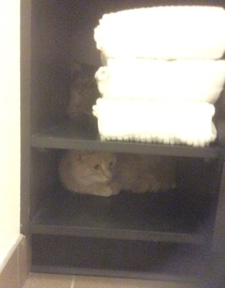 cats hiding in bathroom