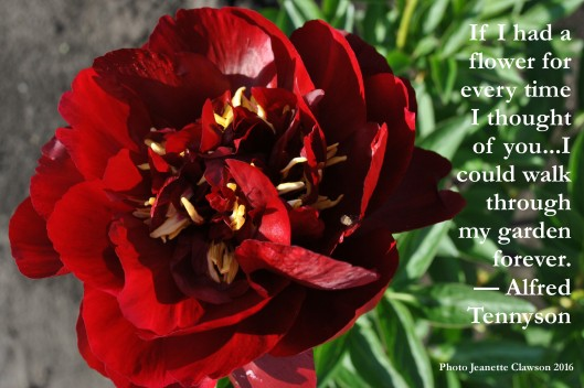 flower quote tennyson