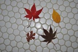 bathrrom-floor-and-leaves