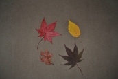 chair-and-leaves
