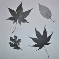 photocopy-of-leaves-jpg