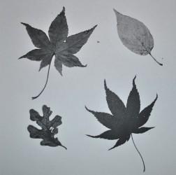 photocopy-of-leaves-jpg