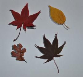 photocopy-shadow-and-leaves-jpg