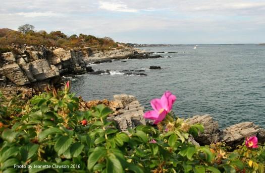 portland-head-lighthouse-flower-of-the-day-jpg