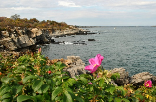 portland-head-lighthouse-flower-of-the-day