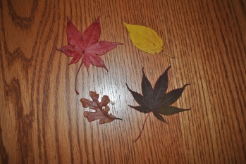 table-and-leaves