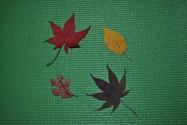 yoga-mat-and-leaves