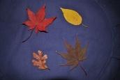 zafu-and-leaves