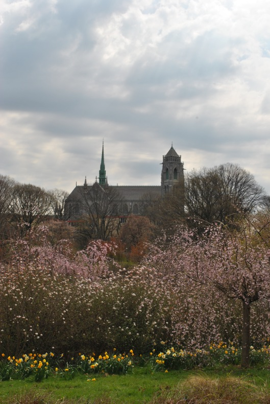 church and blossoms