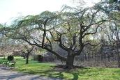 this tree has bones2