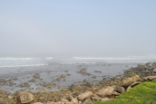 Narragansett foggy shore