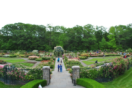 NYBG Rose Garden overview