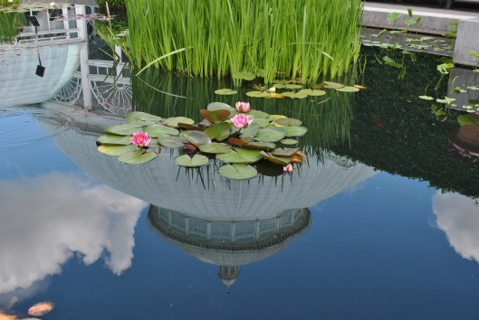 water lily with conservatory reflection