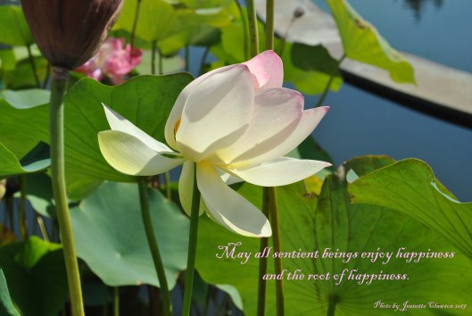 lotus blossom and happiness