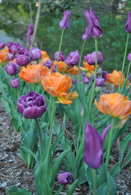 orange and purple flower bed