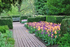 walk way orange and purple flower bed