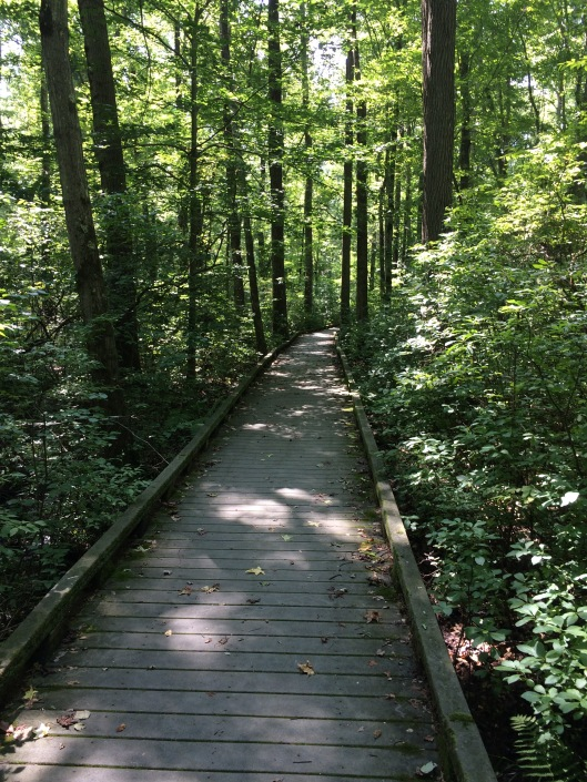 Great swamp boardwalk 2018
