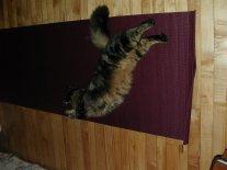Bohnomie does yoga