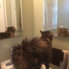 Bohnomie talks to the cat in the bathroom
