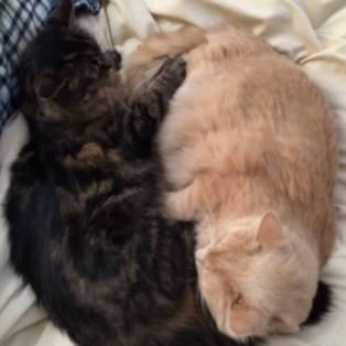 Bohnomie yin and yang